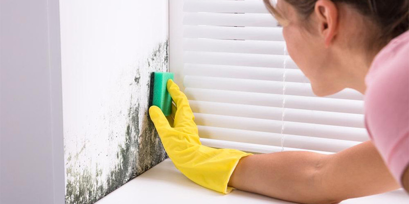 Read more about the article Dangers of Using Bleach to Kill Mold